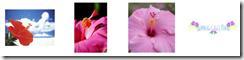 夏の花イラスト素材まとめ7
