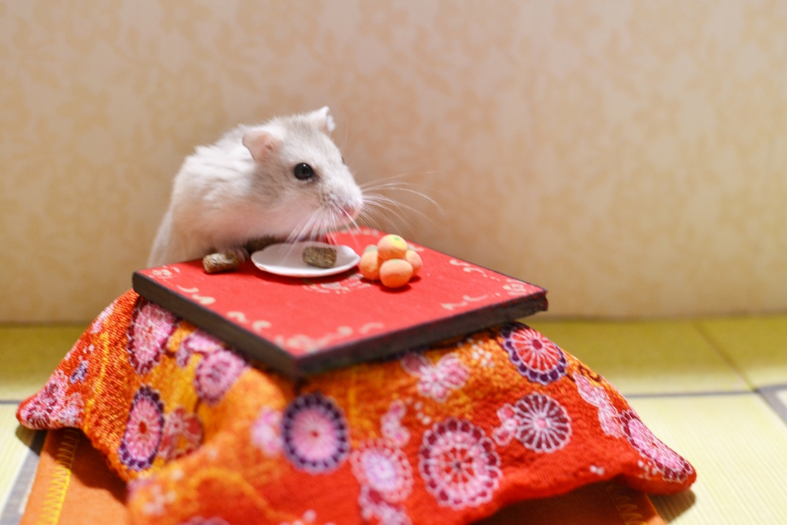 ネズミ 年 男